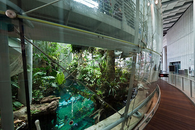The  Rain Forest exhibit is a dome-shaped enclosure to keep the heat & humidity high