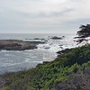 Point Lobos State Natural Reserve - Tuesday 4/4.