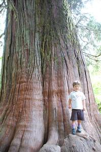 tree: 1000. Kol: 3
