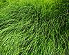 Grass H  8x10