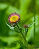 P&Y flower V  8x10