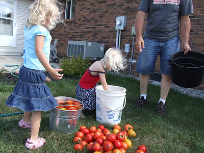 Canning tomatoes Aug.Sept.09