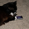 Oreo texting his friends