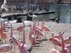 these are real, not plastic-apparently flamingos live in cold climates as well as warm-