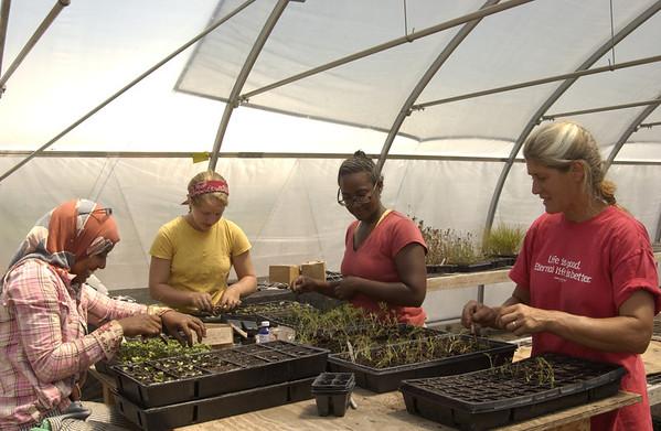 Planting seedlings at Living Hope farm  - 07/30/2011