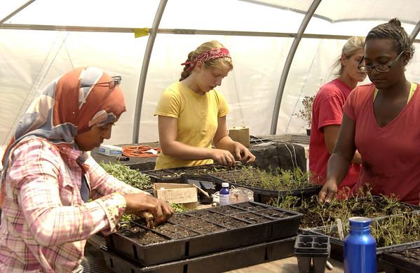 Lydia, Amira & Lauren planting seedlings