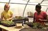 Lydia & Lauren planting seedlings