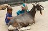 Trudy with Torey Felton, Petting Zoo