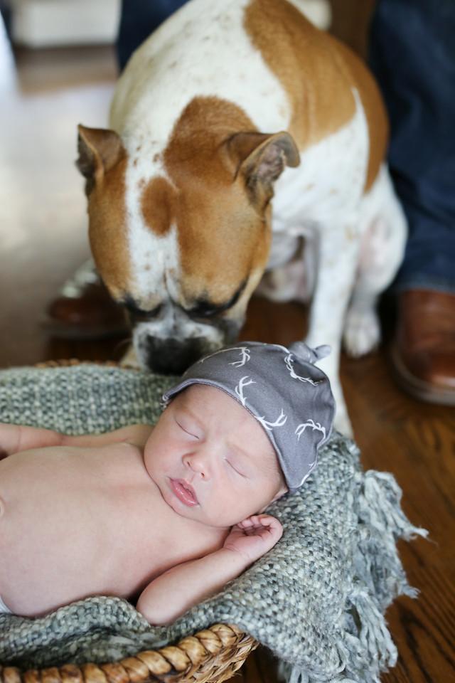 Tate Newborn Portraits-15