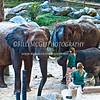 Elephant-Trainers - IMG-3063