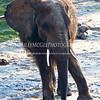 Elephant-Posing - IMG-3026