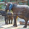 Baby-Elephant - IMG-3115
