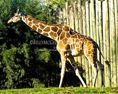 Baltimore Zoo - 15 Nov 2009