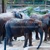 Elephant-Family - IMG-3039