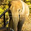Elephant-in-Sun - IMG-3022