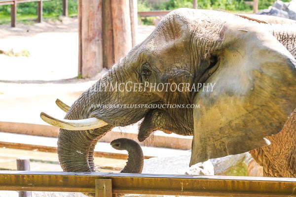 Maryland Zoo - 19 Apr 2012