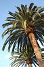 Everywhere you look in San Diego-- palms
