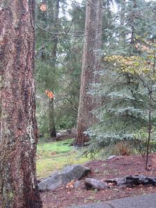 Deer in yard, not far from path to front door.