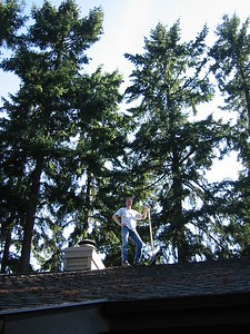 sweeping pine needles off the roof
