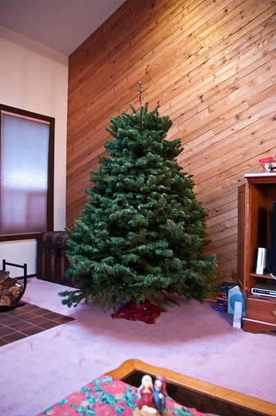 Christmas Tree Saturday (2 of 2)
