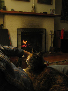 Christmas Eve eve, at home by fire with cat Sevda.