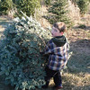 Jeremiah drags the tree all by himself.