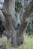 Interestiong tree