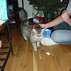 Brittany Cat opening her present