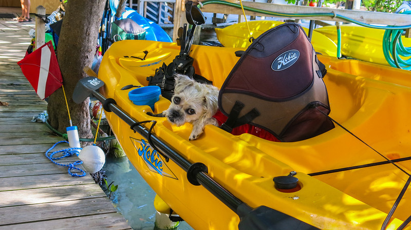 Bubba, the guard dog of the kayak.....  What a face..