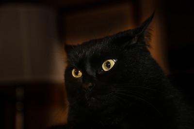 """""""Boo"""" cat"""