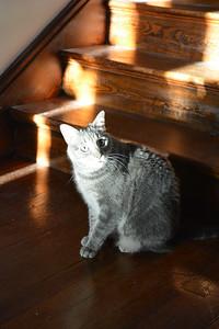 Sarah's cat Puddy.