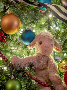 Lamb in a Christmas Tree