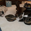 Kitty and Puppy all tuckered out