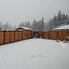 A white Christmas as shown by this shot of our back yard.....