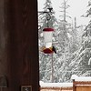 A hummingbird appreciating our feeder during the snow......