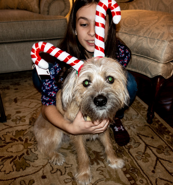 Jagger in the Christmas Spirit