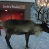 The reindeer came out for a visit....