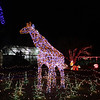 """The giraffe in the """"wild animal"""" section of the light show."""