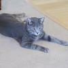 Hurri, one of Jean & Jessie's 2 cats.