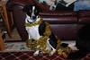 Decorating the Christmas Tree at Cedar Eden • Sadie decked in garland