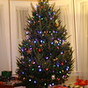 Our Tree 2008