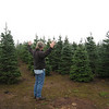 Looking for the best tree $20.00 can buy!