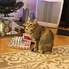 Christmas Eve Cat Pixel