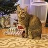 Pixel on Christmas Eve