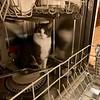 Who Me? Mini in Dishwasher