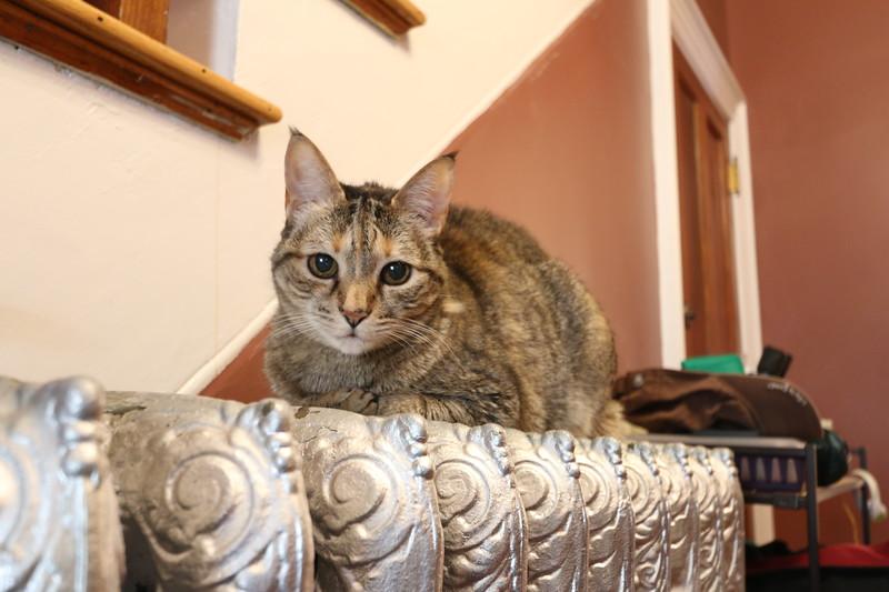 Cat on a hot metal radiator
