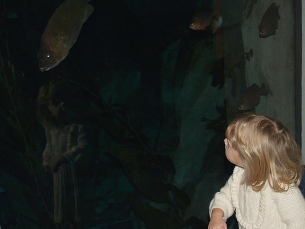 Zara & the fishes