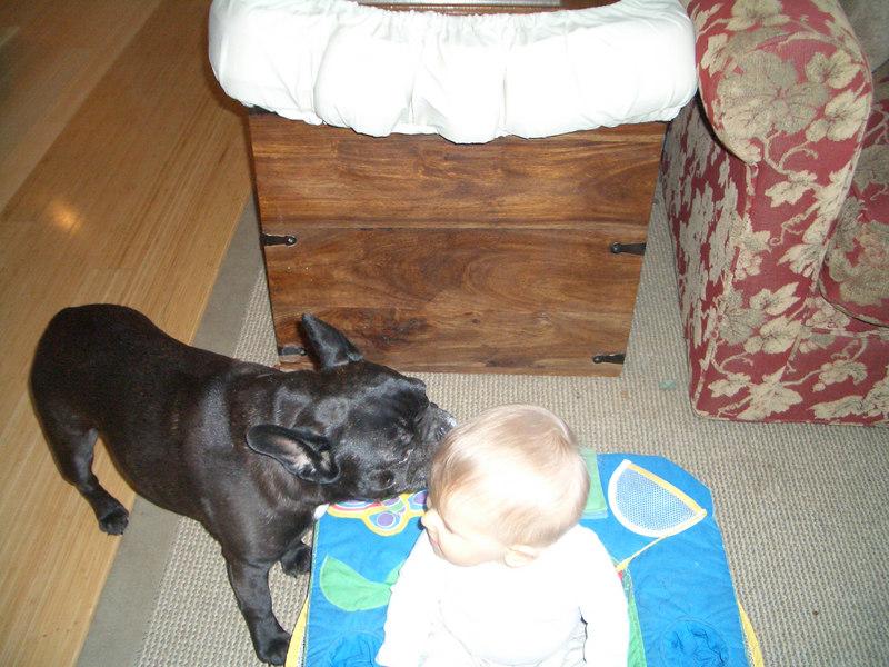 Frankie sniffing Cody.