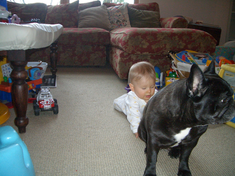 Cody and his own personal guard dog Frankie (my cousin Amy's dog). 12/29