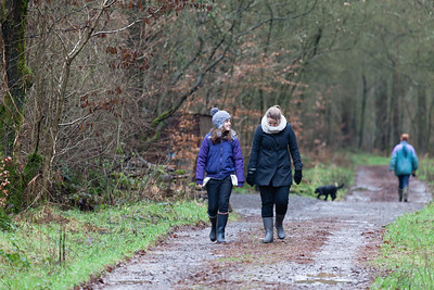 boxing Day walk to see red squirrels